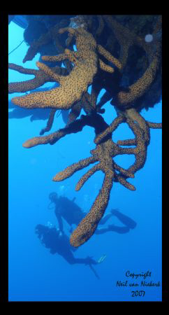 Divers inspect over-hangs 