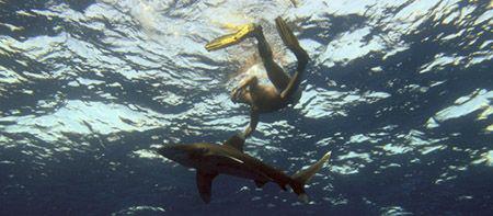 Snorkeler at Elphinestone unaware that underneath him is ... by Joe Graham