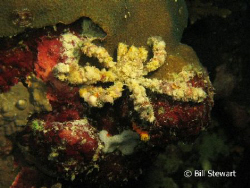 """Spider Crab""  This was taken on the House Reef at Moalbo... by Bill Stewart"