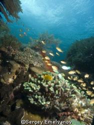 reef life  by Sergey Emelyanov