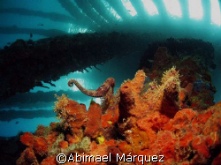 """"""" A look at the Sky"""" (seahorse in the picture), Crash Boa... by Abimael Márquez"""