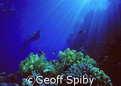 snorkelling near Na`ama Bay in the Red Sea by Geoff Spiby