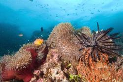 Reef scene in Fiji by Andy Lerner