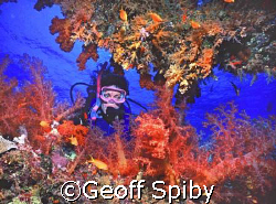 diver and soft corals by Geoff Spiby