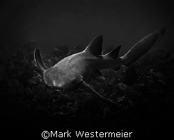 From the Depths - Image taken in Belize with a Nikon D100... by Mark Westermeier