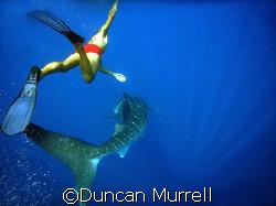 Whale shark ballet. Puerto Princesa Bay, Palawan, the Phi... by Duncan Murrell