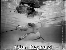 balade, Polaroid Film, 4x5 underwater camera, Moorea 2007. by Ian Regnard