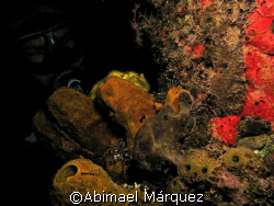 Two Frogfishes and Juan, Crash Boat Piers, Aguadilla, Pue... by Abimael Márquez