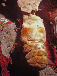 This photo was taken in Roatan on a night dive. The subje... by Steven Anderson