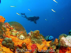 last dive of 2007 in super bowl dive site in parguera area!! by Victor J. Lasanta