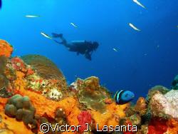 last dive of 2007 in super bowl dive site in parguera area!! by Victor J. Lasanta