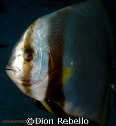 Taken while descending on a dive at the GBR, came up quit... by Dion Rebello