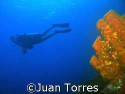 A diver (Eduardo) in Mona Island, Puerto Rico.  Canon S70... by Juan Torres