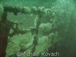 growth on the Ebenezer II off of Fort Lauderdale by Michael Kovach