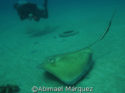 My first dived of 2008, Crash Boat, Aguadilla, Puerto Rico by Abimael Márquez
