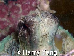 Octopus eye.. Xiao Liu Qiu ; TAIWAN. CASIO EX-Z1000 8mm... by Harry Yang