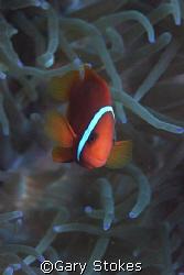 No !   My name ain't Nemo... by Gary Stokes