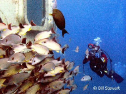 My buddy gets a shot of fish schooling outside Fisheye Pa... by Bill Stewart