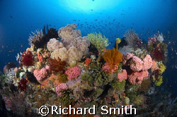 The reefs of southern komodo are amazingly vibrant and di... by Richard Smith