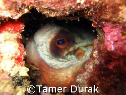 octopus in the cave by Tamer Durak