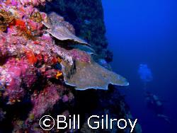 Tahiti dropoff Arue 2008 by Bill Gilroy
