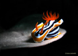Nude pose or pose nude?  Sunset dive when I saw this nudi... by Larry Medenilla
