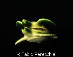 Upside down by Fabio Peracchia