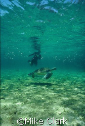 Turtle and diver, startling school of fish. Nikonos v , ... by Mike Clark
