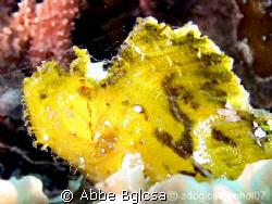 Leaf Fish (as per my spotter :)   by Abbe Bglcsa
