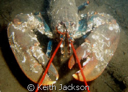 What you lookin' at? by Keith Jackson