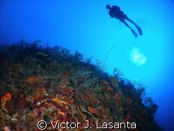 deep view in the G point dive site in parguera area,,,,c... by Victor J. Lasanta