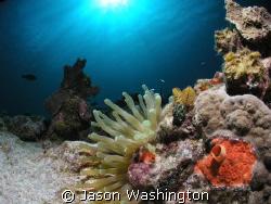 """Turtle Reef """"Sun Divers shore dive""""  by Jason Washington"""