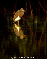 Sunset Reflections - Image taken in SW Florida with a Nik... by Mark Westermeier