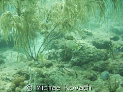 Third reef line off Fort Lauderdale by Michael Kovach