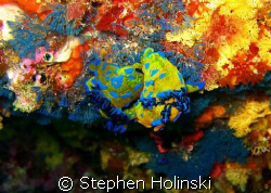 Colorful Love.  Poor Knights diving in New Zealand, taken... by Stephen Holinski