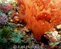 Can Seaweed be colourful by Karl Hodgkins