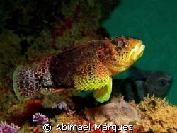 Reef Scorpionfish, Crash Boat Pier, Aguadilla by Abimael Márquez