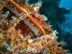 OYSTER, Bora Bora  by Marc Biehler