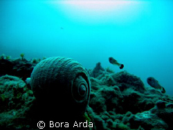 Is this rule of thirds?:) Canon A95 Saros Turkey by Bora Arda
