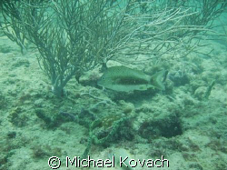 Inside reef at Lauderdale by the Sea by Michael Kovach