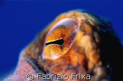 Octopus eye's. by Fabrizio Frixa