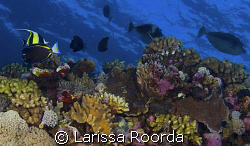 Reef shot on the Great Barrier by Larissa Roorda