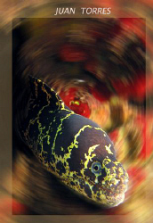 Chain moray eel.  Canon S70. by Juan Torres