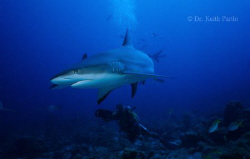Shark and Videographer by Keith Partlo