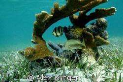 Taken in Belize while snorkeling, natural light by Alex Klingen