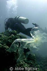 Save our Seas!  Plastic wrapper floating on the dive site... by Abbe Bglcsa