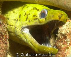 Mad looking moray found off Tioman Islanld, Malaysia.  Sh... by Grahame Massicks