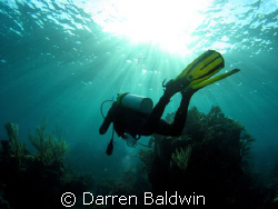 Taken with a Canon A540 and DC2 housing, using an Inon UW... by Darren Baldwin