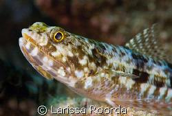 Lizardfish by Larissa Roorda