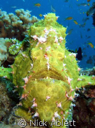 Nose to nose with a frogfish by Nick Ablett